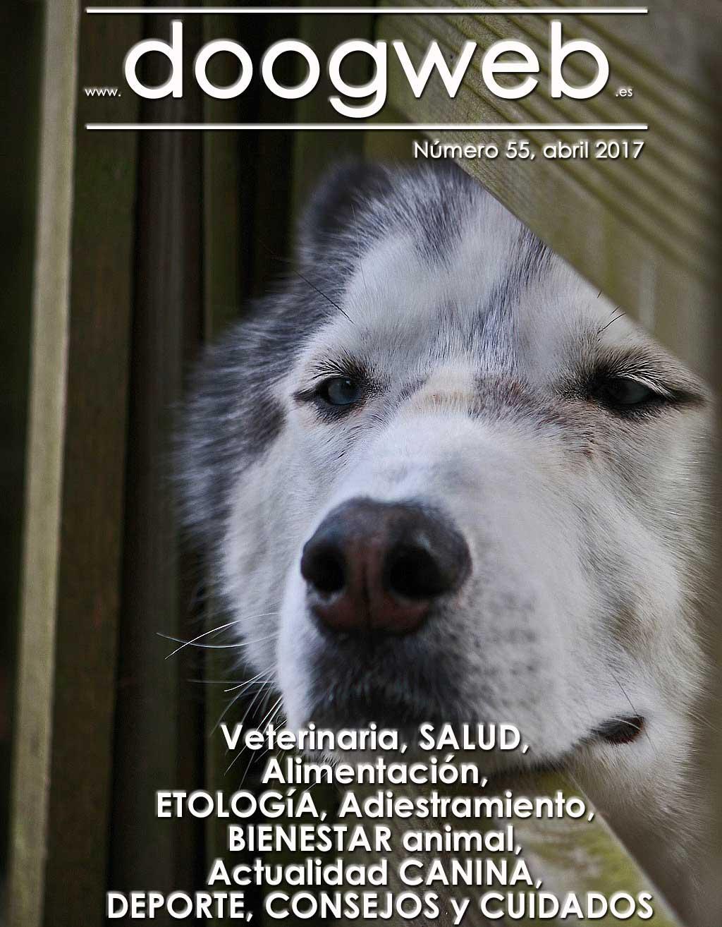 Revista de perros gratis de Doogweb.