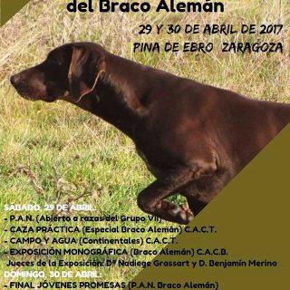 XXXIII Monográfica Nacional del Braco Alemán en Pina de Ebro (Zaragoza) .