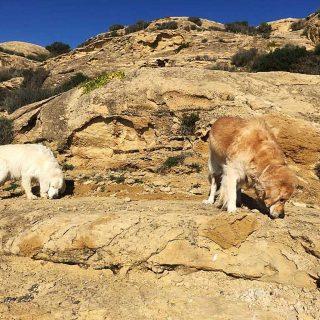 Inteligencia olfativa: Cómo utilizar Nosework para ayudar a perros y dueños a mejorar la situación con un perro agresivo, estresado o temeroso.
