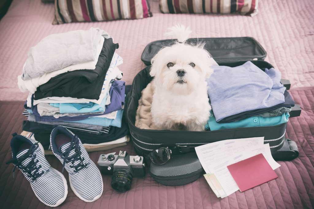 Kiwoko, la mayor cadena de tiendas de animales de España, nos da las principales pautas para preparar unas vacaciones cuando hay un animal en casa.