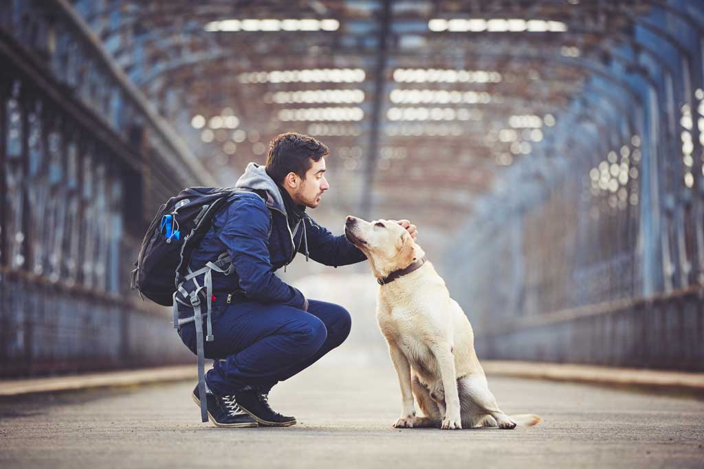 Kiwoko, la mayor cadena de tiendas de animales de España, nos da las principales pautas para preparar unas vacaciones cuando hay un animal en casa