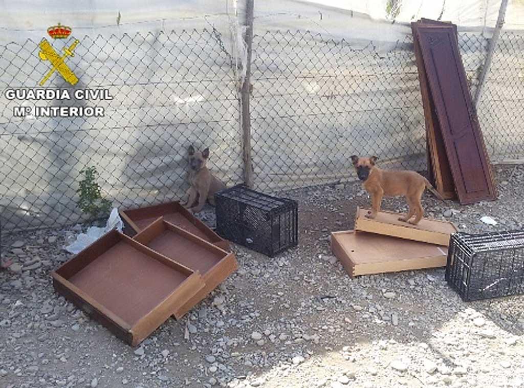 La Guardia Civil detiene a una persona por el abandono y maltrato de 19 perros malinois y de otras razas.