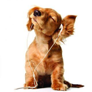 Estudio de la Sociedad Protectora de Escocia demuestra que hay tipos de música que gustan en especial a los perros...