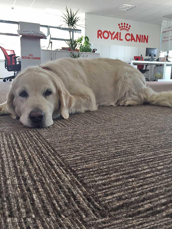 El 86% de los empleados considera que la presencia de mascotas en el puesto de trabajo reduce los niveles de estrés.