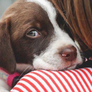 Abraza a tu perro y salvarás vidas