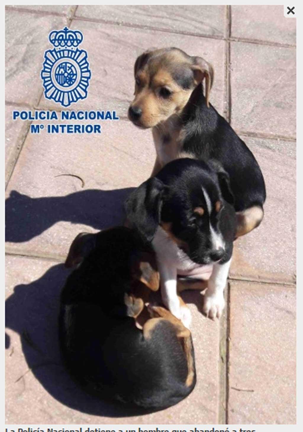 La Policía Nacional detiene a un hombre que abandonó a tres cachorros dentro de una bolsa en la carretera.