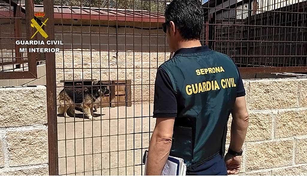 La Guardia Civil interviene una instalación con 59 perros en pésimas condiciones higiénico-sanitarias
