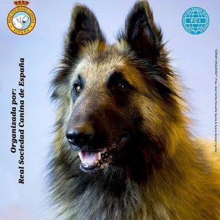 La Real Sociedad Canina de España organiza la 89 Exposición Internacional Canina de Primavera.