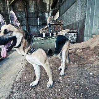 En el Centro de Convenciones de San Diego acaban de presentar este prototipo de cámara para perros de intervención. Es la K9MC4 de Tactical Electronics