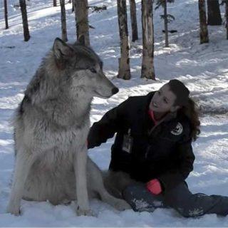 """Danielle y """"sus"""" lobos."""