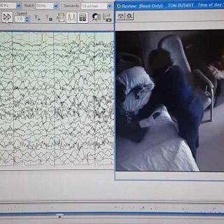 Proyecto de perros detectores de epilepsia de la Universidad de Alicante.