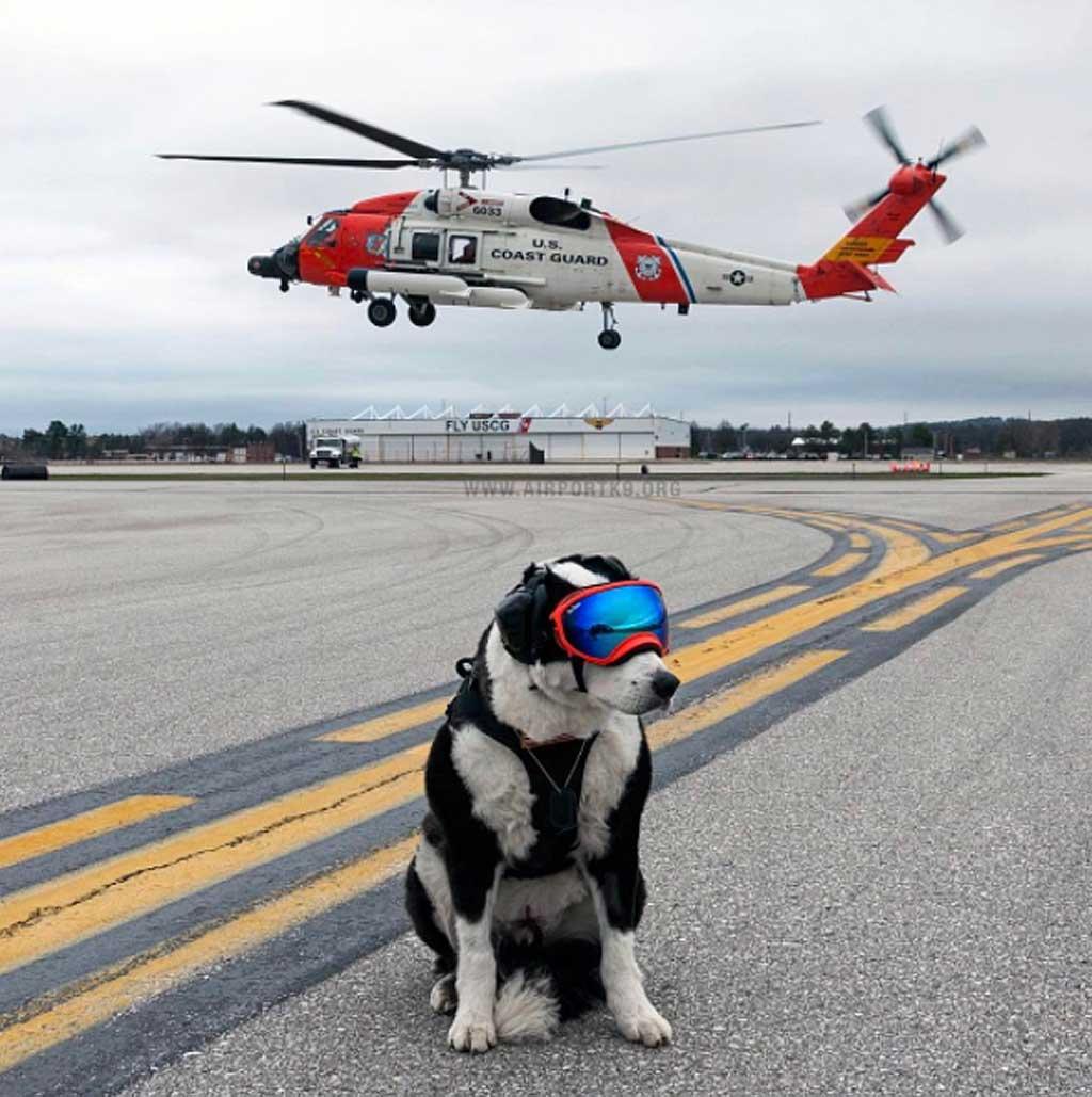 Piper, el border collie que vela por la seguridad del aeropuerto.