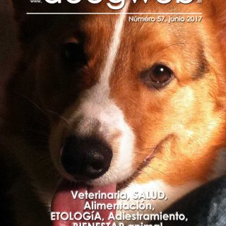 Revista gratis de perros de doogweb, junio 2017.