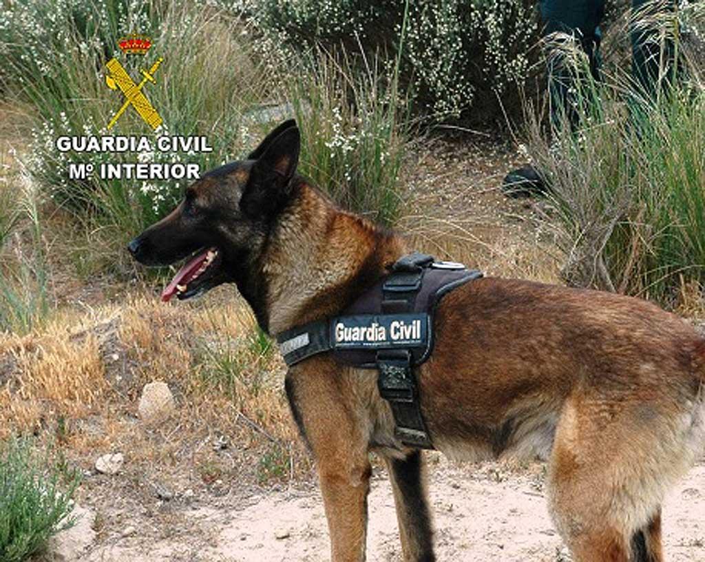 Cuenta con el apoyo de una Unidad Canina de la Guardia Civil altamente especializada, con base en El Pardo (Madrid). Se han realizado inspecciones en 16 localidades de la provincia y se localizaron restos de carne impregnados en veneno.