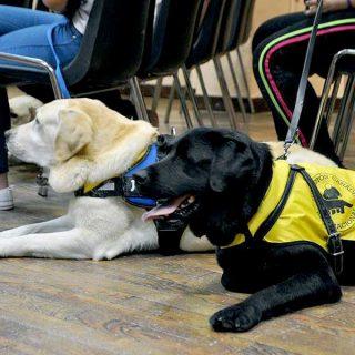 La Fundación Canadd Internacional entrega nuevo perro de servicio para Esclerosis Múltiple