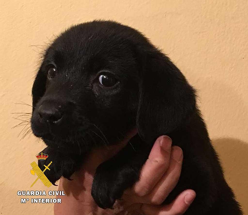 Denunciar la estafa en la venta de perros ¡funciona! A raíz de dos casos denunciados, el SEPRONA de la Guardia Civil ha instruido diligencias a un criador de perros afincado en la comarca Odra-Pisuerga como presunto responsable de dos supuestas estafas en la venta de dos animales.