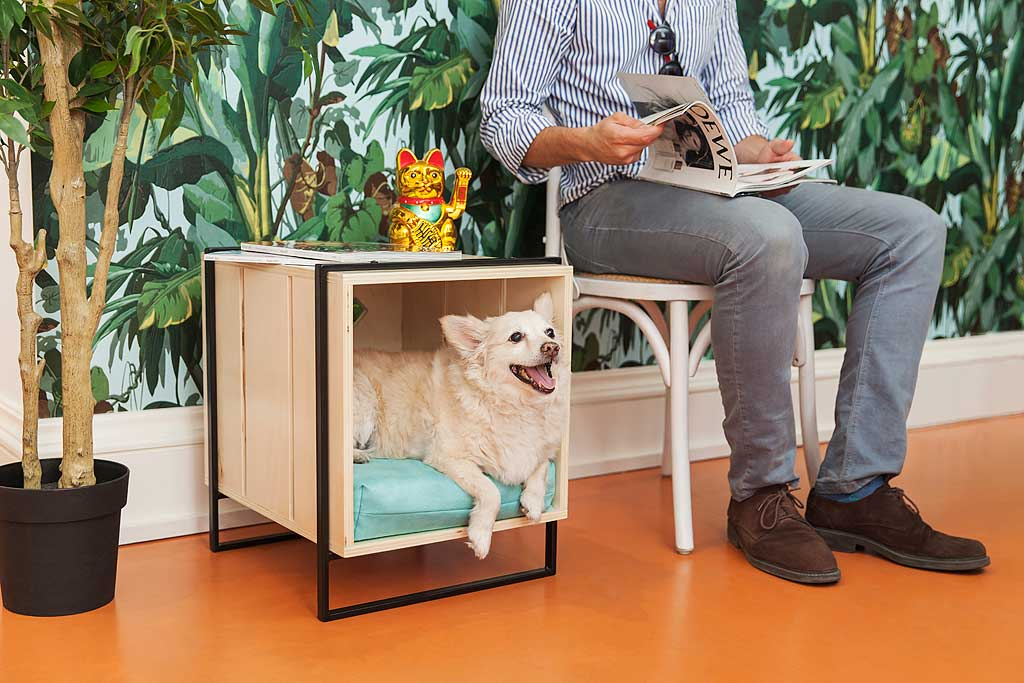 El 23 junio: 'Día de llevar tu perro al trabajo' #JefeContrataAMiPerro.