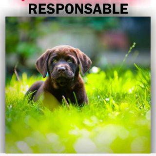 59 asociaciones madrileñas de protección animal piden que se cambie el reglamento del Gobierno regional.