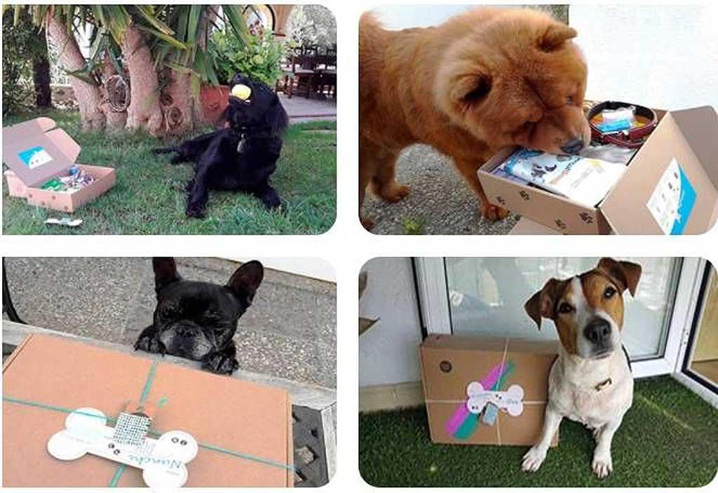 Central de Mascotas, el primer buscador especializado en residencias caninas.