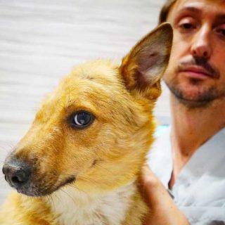 Sky, el perro maltratado, se recupera gracias a la cirugía veterinaria .
