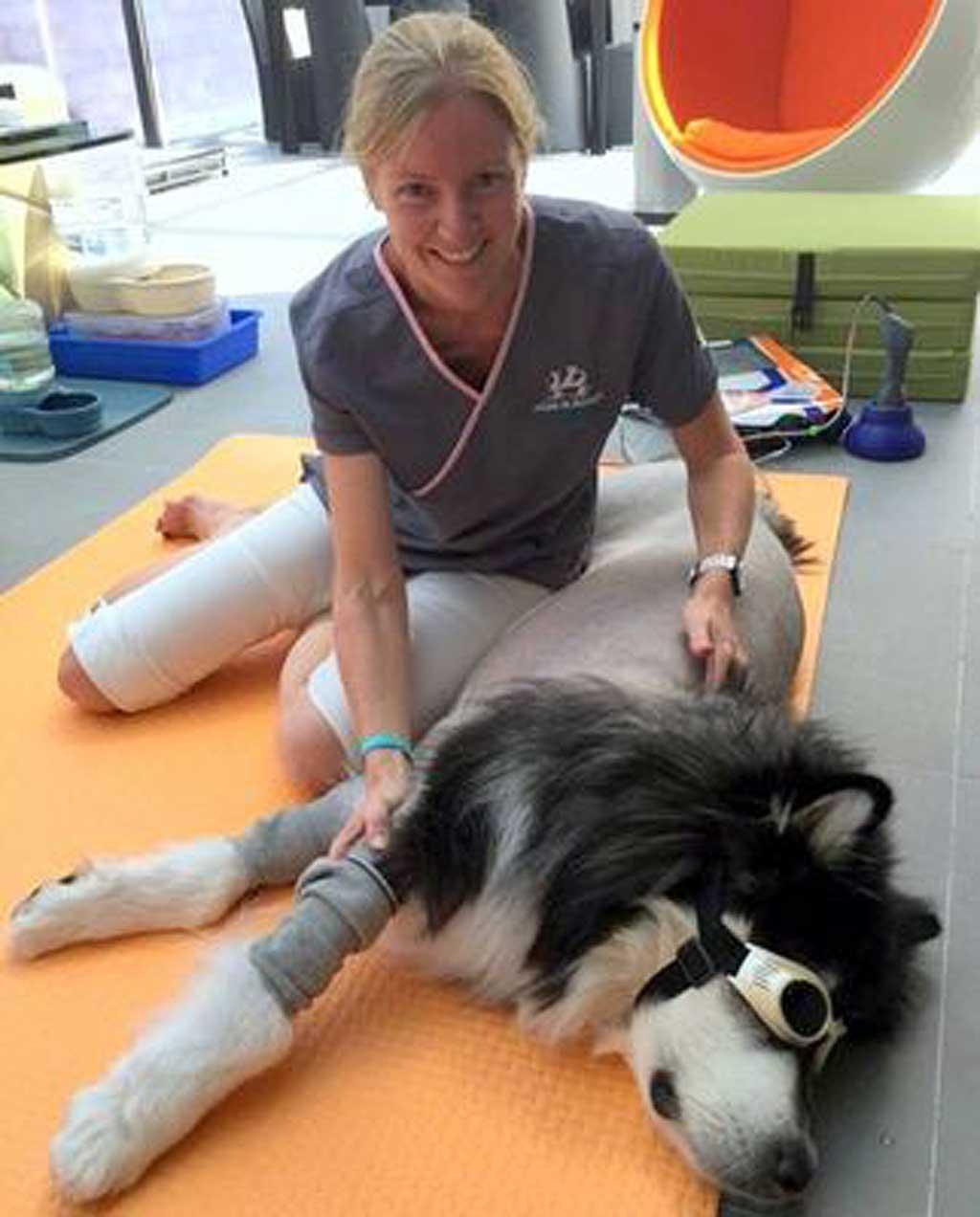 Terapia con láser en perros