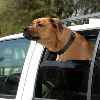 Perros en vacaciones: lo que debes tener en cuenta.