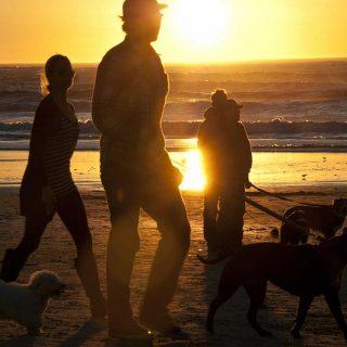 La Real Sociedad Canina de España ofrece las claves para que los canes puedan disfrutar de esta época del año sin riesgos.