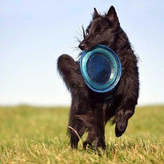 Los mejores deportes para practicar con tu perro en verano.
