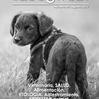 Revista Doogweb agosto 2017.