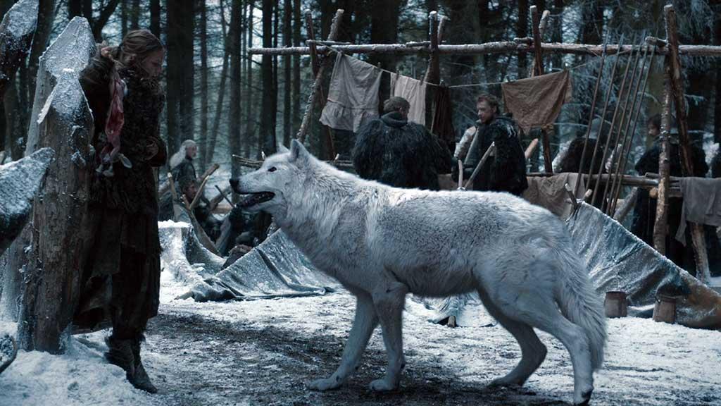 El lobo huargo no es un husky, no lo compres.