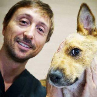 Sky perro maltratado en Valencia.