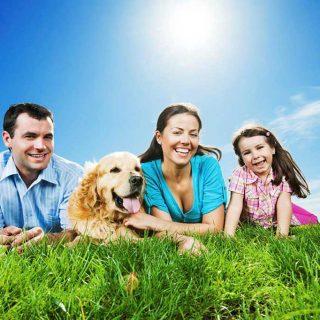 Ideas para hacer con los perros en vacaciones.