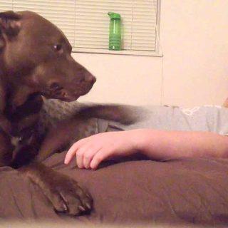 Perro adiestrado para atender crisis epilépticas.