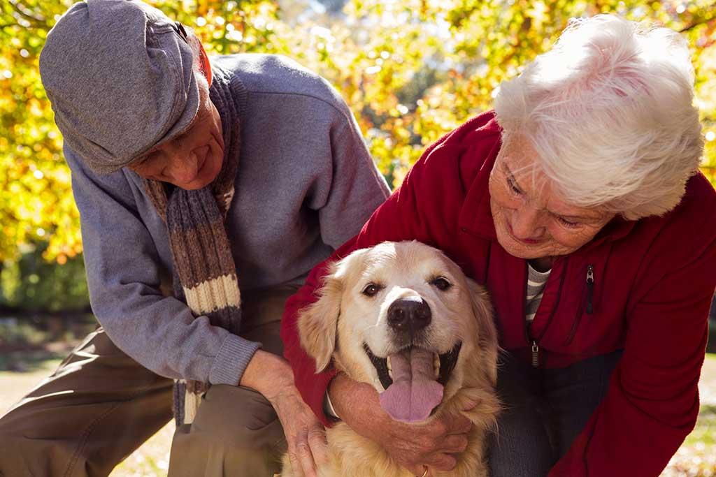 Compartir nuestro día a día con una mascota es beneficioso en cualquier época de la vida, ya que nos ayuda a mejorar la salud y el bienestar tanto a nivel físico como emocional.
