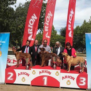 Resultados de la Exposición Nacional Canina de Razas Españolas.
