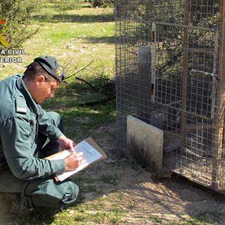 La Guardia Civil investiga a dos personas por el uso ilegal de venenos.