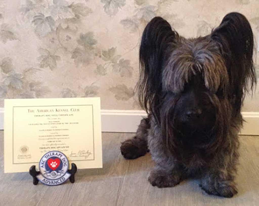 """Perro de la terapia : """"Dennis,"""" un Skye Terrier propiedad de Stephen P. Hersey, de Hampton, New Hampshire."""