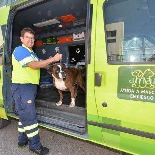 El proyecto de Ambulancias de Lorca, AMAR (Ayuda de Mascotas en Riesgo), ha realizado sus primeros seis meses de funcionamiento 15 servicios de recogida de perros..