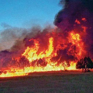 Plan para evacuar animales en catástrofes e incendios.