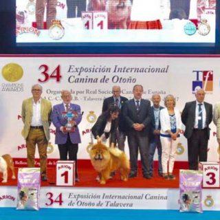Resultados de la 34º Exposición Internacional Canina de Otoño.
