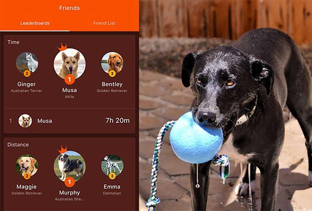 Waggit, gadget para perros multifunción.