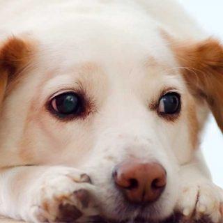 Dexmedetomidina para perros ¿Un fármaco que soluciona el miedo a los fuegos artificiales?