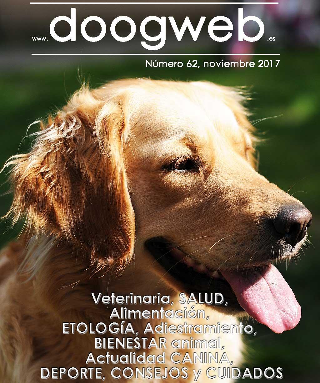 Revista gratis doogweb nº 62, noviembre 2017