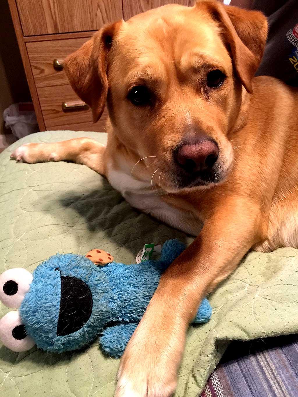 Los perros prefieren los juguetes nuevos a los que ya conocen.