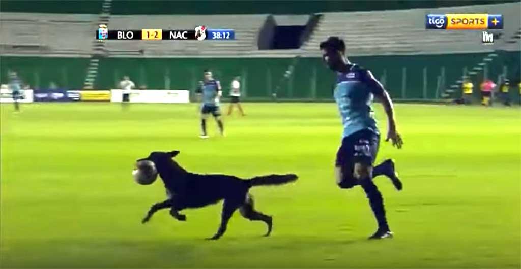 """Perro policía """"la lía"""" en un partido de fútbol."""