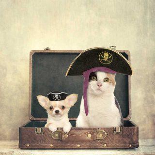 ViajerosPiratas, el portal europeo experto en viajes, te ofrece las claves para llevarte a tu mascota de viaje sin ningún problema o inconveniente.