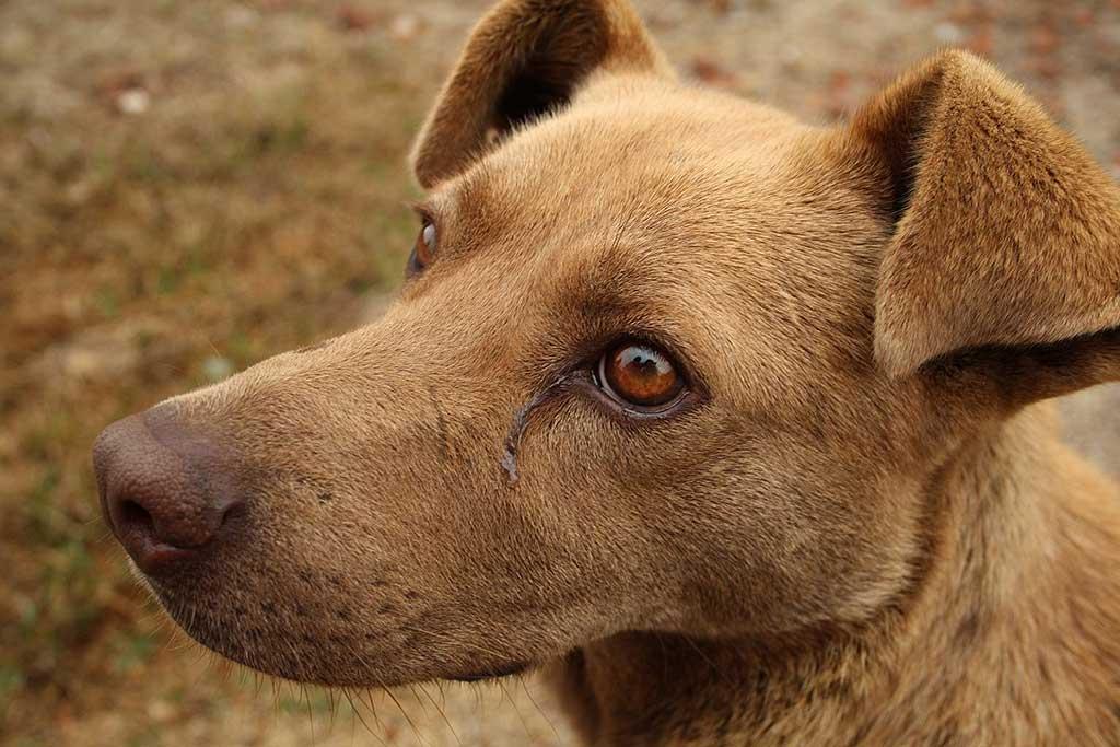Enfermedades genéticas... ¿en perros no de raza?