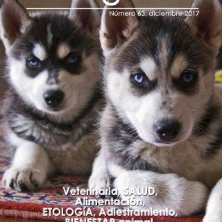 Revista gratis doogweb nº 63, diciembre 2017.
