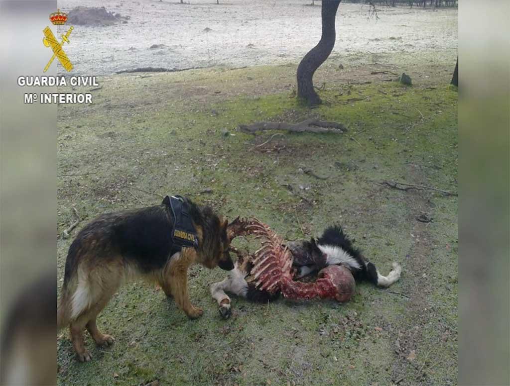 Detención e investigación de 16 personas por el uso ilegal de venenos para la caza