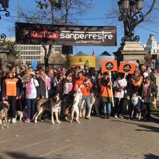 Cientos de madrileños con sus perros llenan las calles del centro de Madrid en la Sanperrestre 2017.
